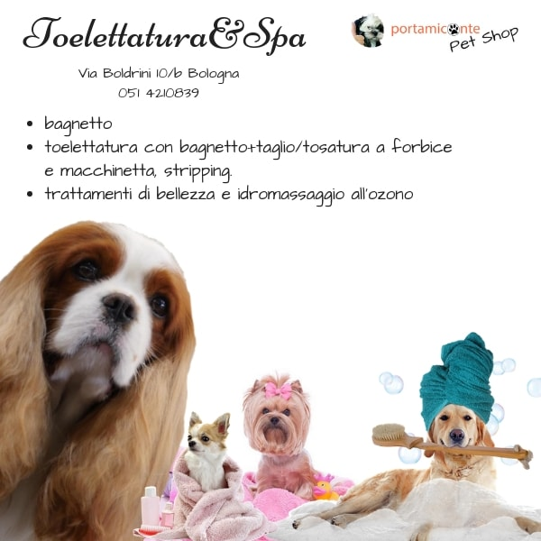 toelettatura-portamiconte-pet-shop