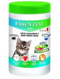essential-gatto-junior